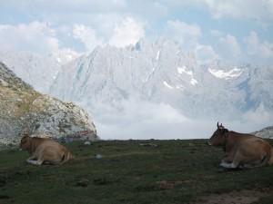 Trekking en los Picos de Europa, Vega de Ario