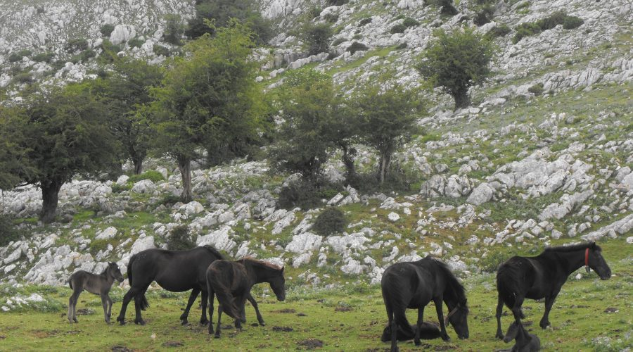 trekking 6 dias en asturias