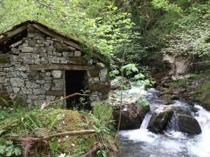 Ruta de Senderismo en Parque Natural de Redes, Asturias, ¡recórrela en compañía de los guías de Senderos de Asturias!