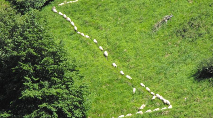 Excursión a Las Majadas de Los Pastores de los Picos de Europa