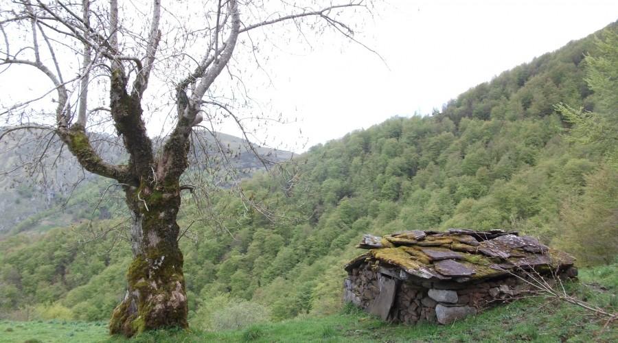 Ruta organizada en parque Natural de Redes, asturias