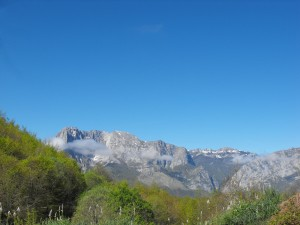 bosque de peloñu, asturias